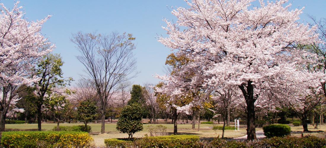熊谷さくら運動公園(庭園)